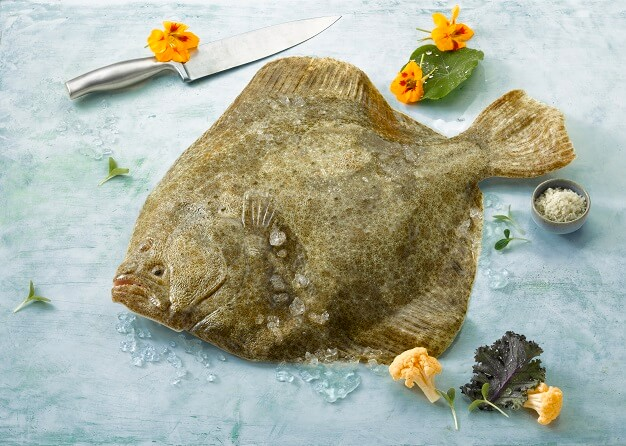 img_turbot_fournisseur_poissons