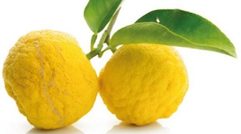 img_citrons_et_agrumes_exotiques_yuzu_grossiste_alimentaire