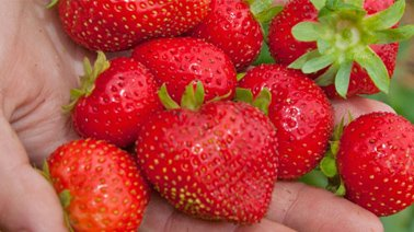 img_suggestions_fraise