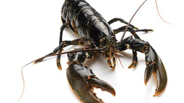 img_suggestions_homard.