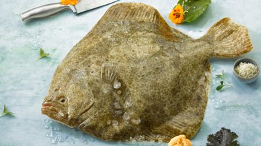 img_suggestions_turbot