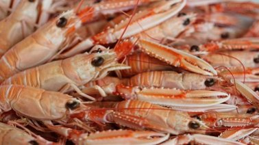 img_suggestions_langoustines_fournisseur_alimentaire_restauration